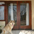 Pet Friendly Door